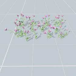Tulips set 4