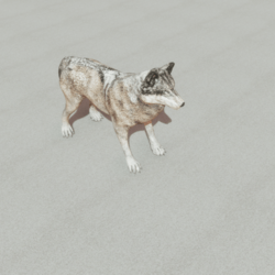 Animals - Grey wolf