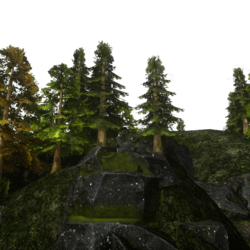 Conifer Hill Rock Forest