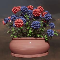 Pot Hydrangea  pink blue