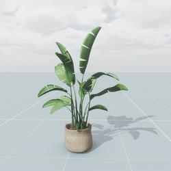 Pot Plant Large 2
