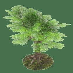 Dream Tree 1