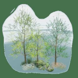 Little Forest Scene