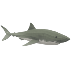 Turning Shark