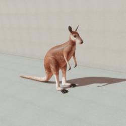 Animals - Kangaroo