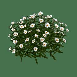 Daisy Flower-Group 3