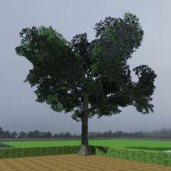 TKA Tree M2