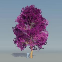 Maple Tree purple 2