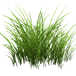 Grass Patch Small v2