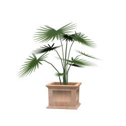 potted house plant 2