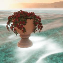 pot, roses