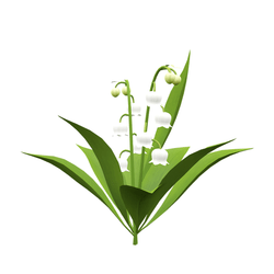 lily of the valley plant