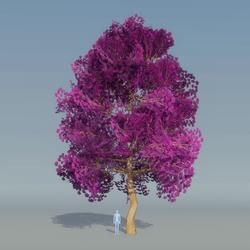 Maple Tree purple 5