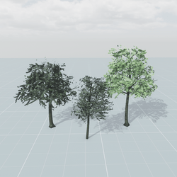 Outdoor Trees