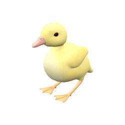 Duckling - female