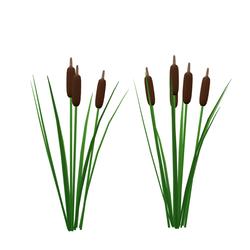 cattail - pond plants