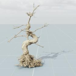 Dead Tree 8