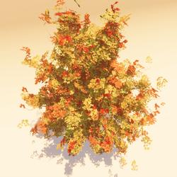 Animated Maple 02