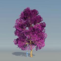 Maple Tree Purple 3
