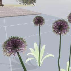 allium flowers set