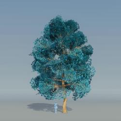Maple Tree Blue 3