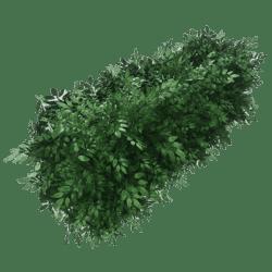 Hedge topiary bush