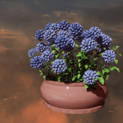 pot  Hydrangea blue