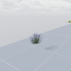 Lavanda flowers
