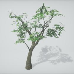 TKA-Tree 4A
