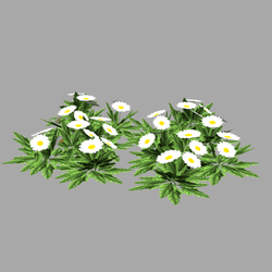 Daisies - low poly plant