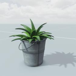 Succulent Bucket