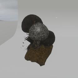 mushrooms rock