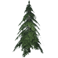 Forest Pine 3