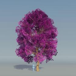 Maple Tree Purple 1
