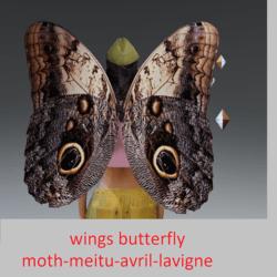 wings butterfly moth-meitu-avril-lavigne