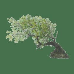 Twisted Tree 3